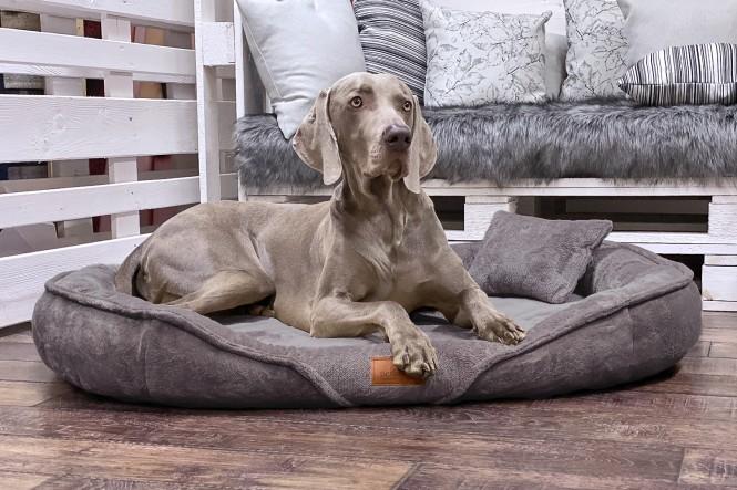 XENIA TEDDY   Orthopädisches Hundebett XL   Graphit Taupe