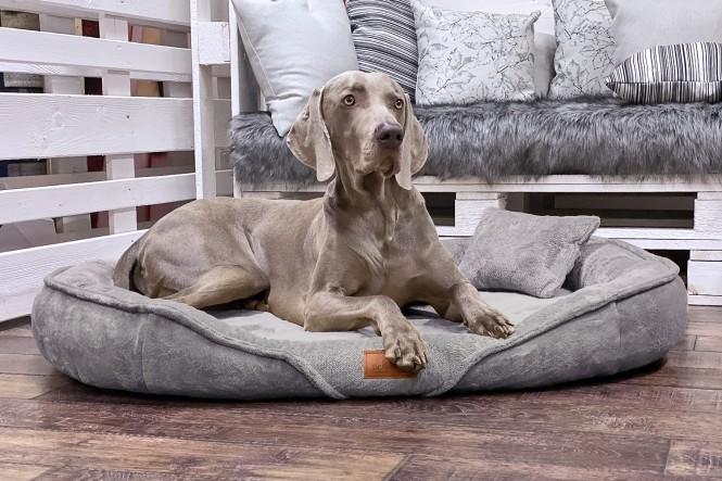 XENIA TEDDY   Orthopädisches Hundebett XL   Grau