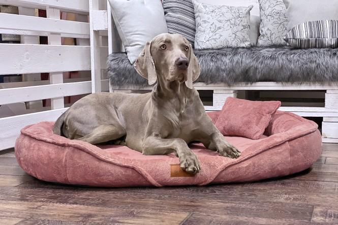 XENIA TEDDY | Orthopädisches Hundebett XL | Altrosa