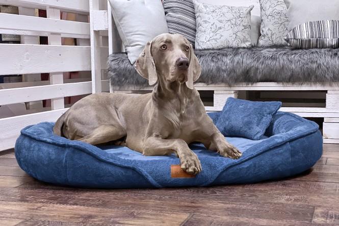 XENIA TEDDY | Orthopädisches Hundebett XL | Blau