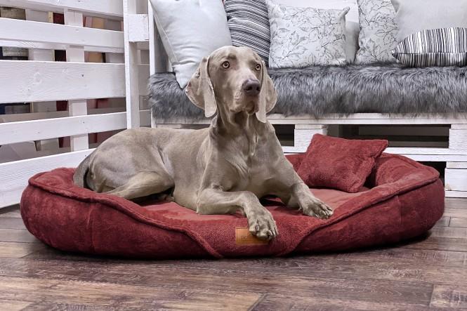 XENIA TEDDY   Orthopädisches Hundebett XL   Bordeaux