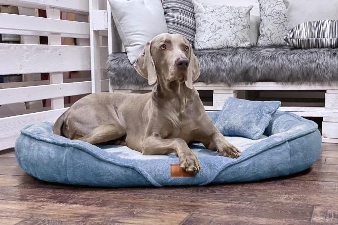 XENIA TEDDY   Orthopädisches Hundebett XL   Hellblau