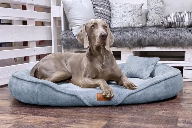 XENIA TEDDY | Orthopädisches Hundebett XL | Graublau