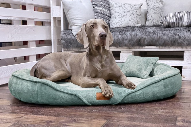 XENIA TEDDY | Orthopädisches Hundebett XL | Mint