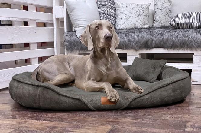 XENIA TEDDY | Orthopädisches Hundebett XL | Olive