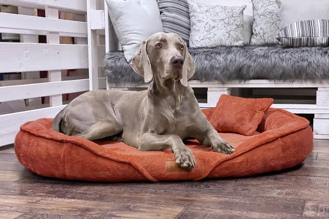 XENIA TEDDY | Orthopädisches Hundebett XL | Terracotta