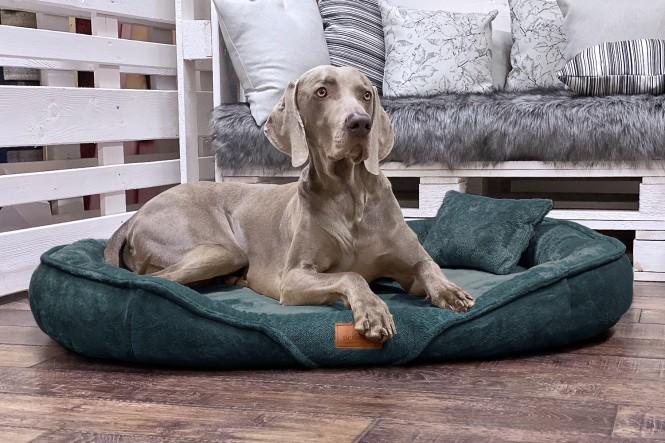 XENIA TEDDY | Orthopädisches Hundebett XL | Petrol