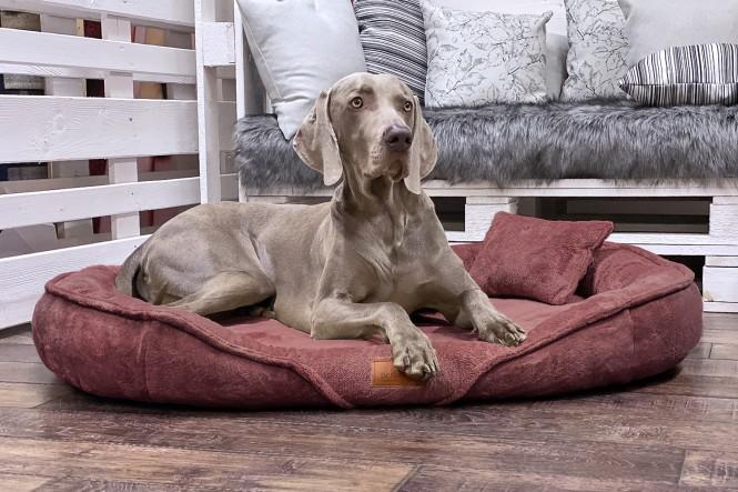 XENIA TEDDY | Orthopädisches Hundebett XL | Nude