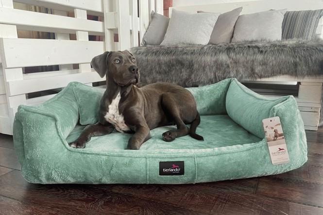 FRANKLIN TEDDY   Orthopädisches Hundebett M+   Mint