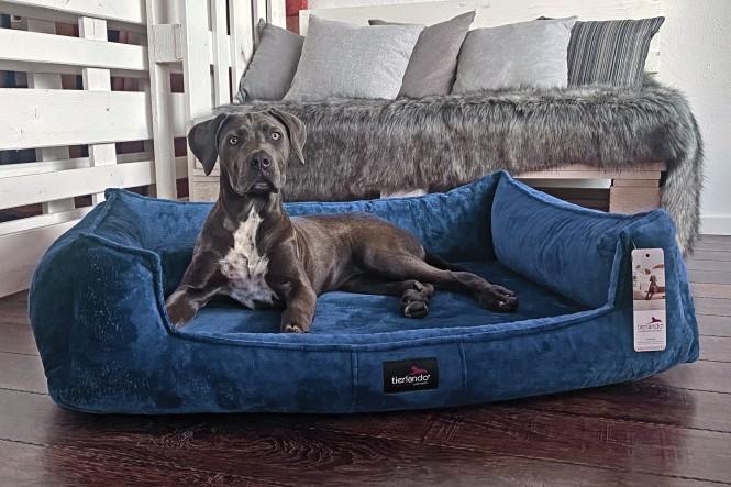 FRANKLIN TEDDY   Orthopädisches Hundebett M+   Blau