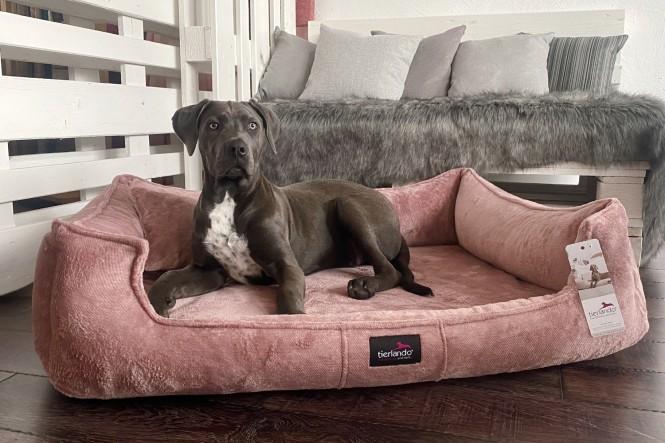 FRANKLIN TEDDY | Orthopädisches Hundebett M+ | Altrosa