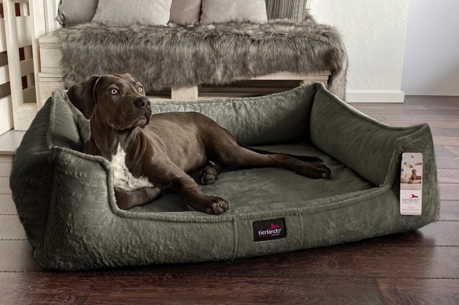 FRANKLIN TEDDY | Orthopädisches Hundebett M+ | Olive
