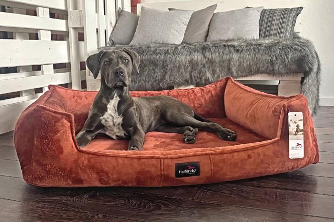 FRANKLIN TEDDY   Orthopädisches Hundebett M+   Terracotta