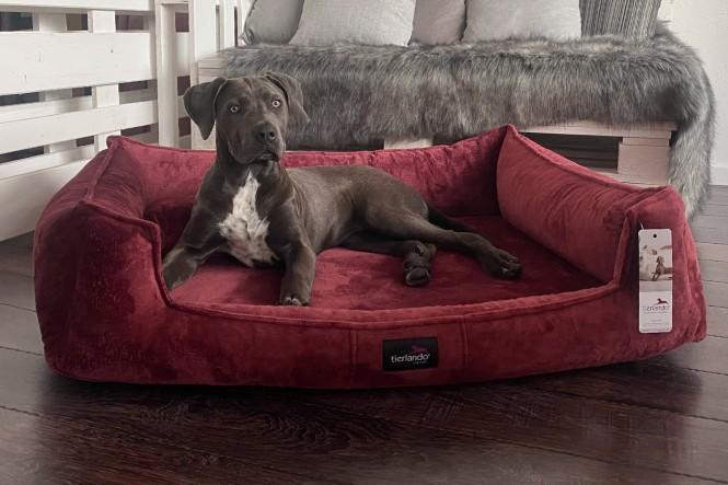 FRANKLIN TEDDY | Orthopädisches Hundebett M+ | Bordeaux