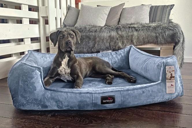 FRANKLIN TEDDY | Orthopädisches Hundebett M+ | Hellblau