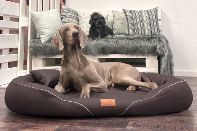 TIFFANY EASY CLEAN | Orthopädisches Hundebett XL | Braun