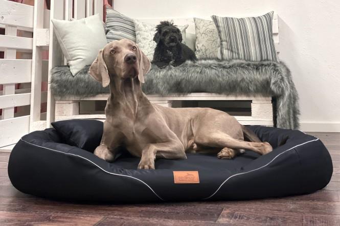 TIFFANY EASY CLEAN | Orthopädisches Hundebett - XL | Schwarz