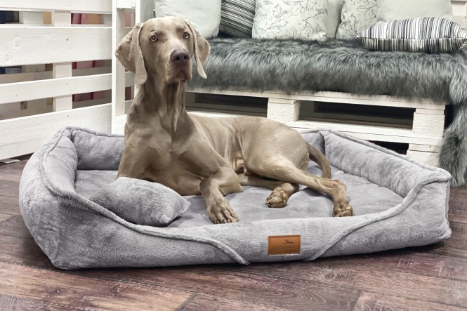 TYSON TEDDY   Orthopädisches Hundebett M+   Graphit Taupe