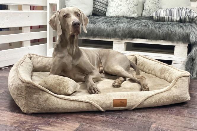 TYSON TEDDY   Orthopädisches Hundebett M+   Beige