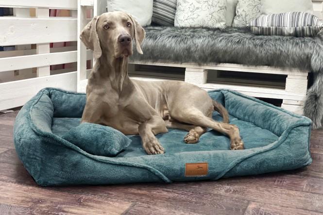 TYSON TEDDY | Orthopädisches Hundebett