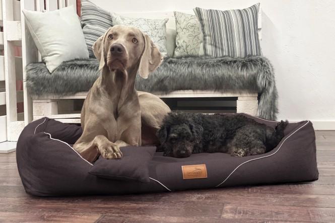WILLIAM COUTURE | Orthopädisches Hundebett M+ | Dunkelbraun