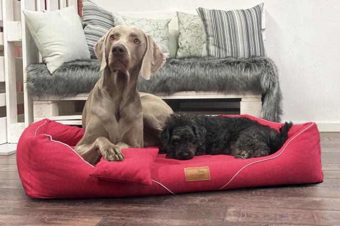 WILLIAM COUTURE | Orthopädisches Hundebett M+ | Rot
