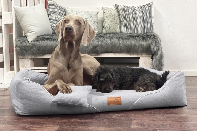WILLIAM COUTURE | Orthopädisches Hundebett M+ | Hellgrau