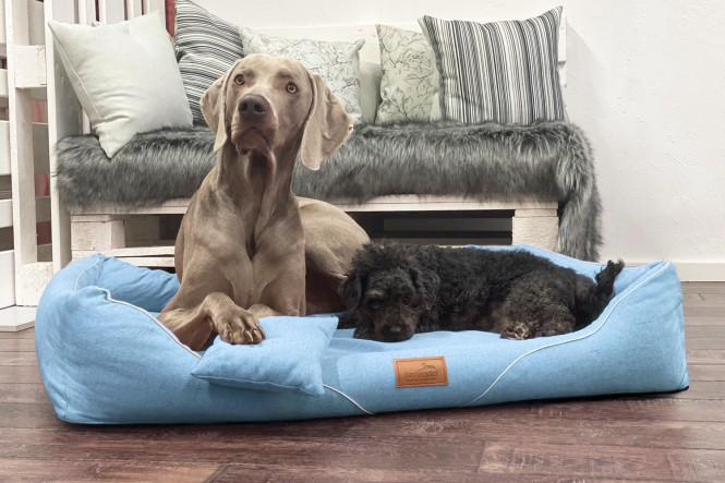 WILLIAM COUTURE | Orthopädisches Hundebett M+ | Jeans Blau