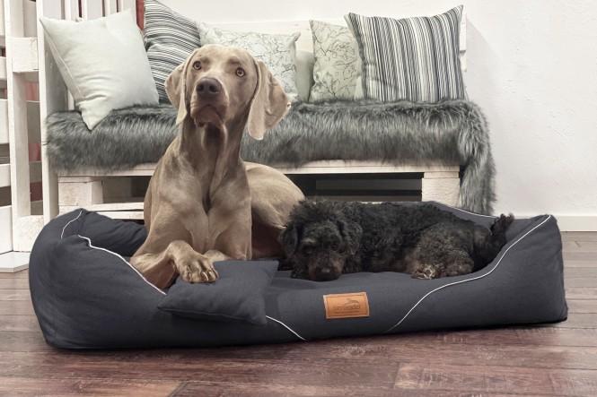 WILLIAM COUTURE | Orthopädisches Hundebett