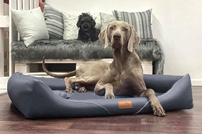 WILLIAM EASY CLEAN | Orthopädisches Hundebett M+ | Graphit