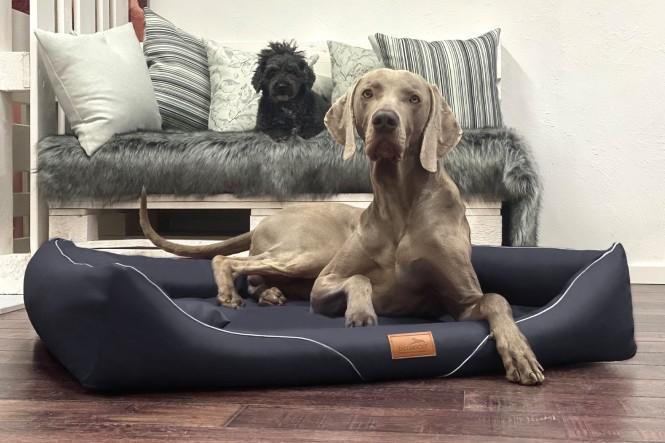 WILLIAM EASY CLEAN   Orthopädisches Hundebett M+   Schwarz