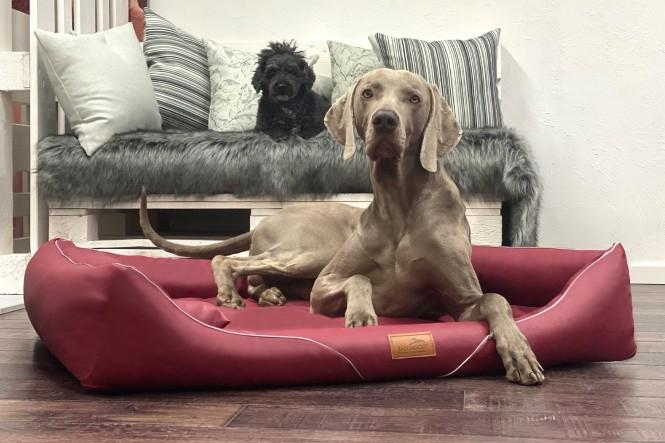 WILLIAM EASY CLEAN | Orthopädisches Hundebett M+ | Dunkelrot