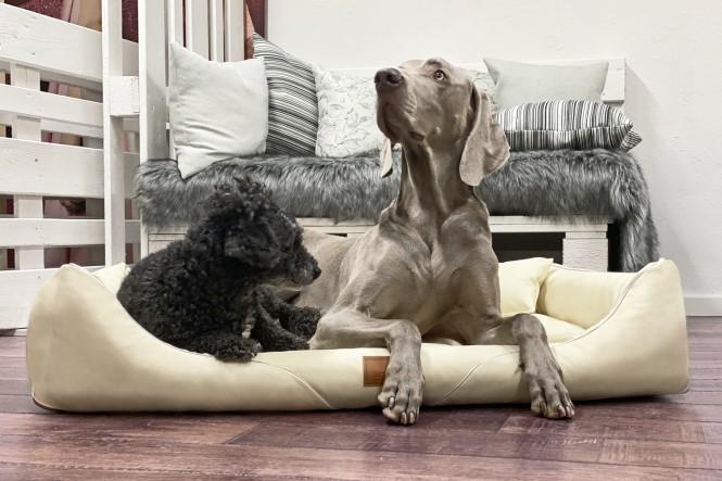 WILLIAM EASY CLEAN | Orthopädisches Hundebett M+ | Creme