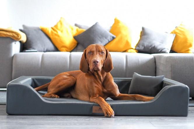 Orthopädisches Hundebett MELODY LATEX-Matratzenkern XL 120 cm Kunstleder Graphit - XL | Graphit