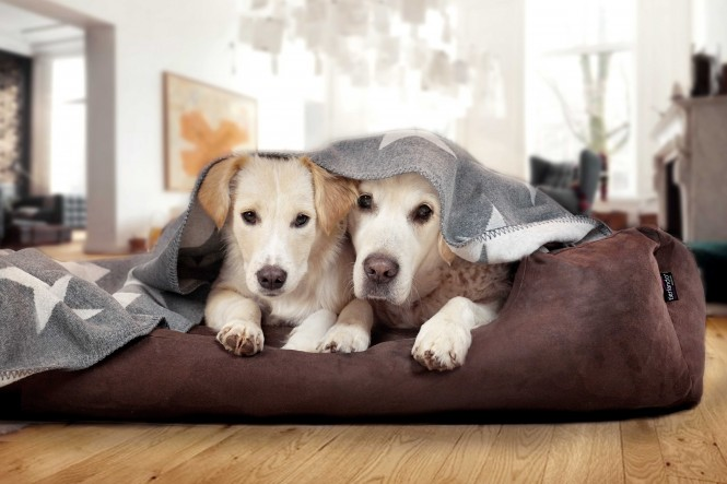 Hundebett MORITZ KOMFORT M+ 90 cm | fest gewebtes Polyester | Braun M+ | Braun