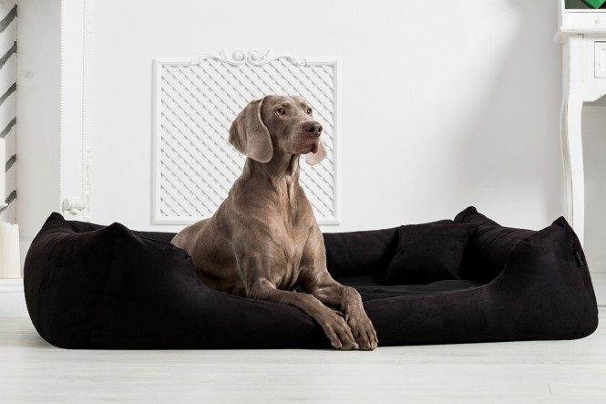Hundebett MORITZ KOMFORT XXL+ 160 cm   fest gewebtes Polyester   Schwarz XXL+   Schwarz