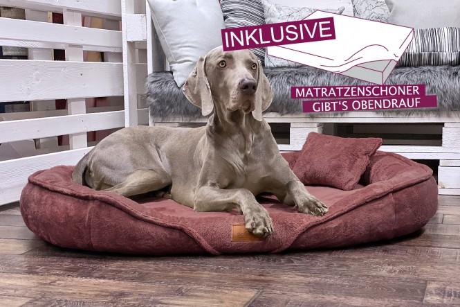 EINZELSTÜCK | Orthopädisches Hundebett Xenia XXXL + Schonbezug Gratis