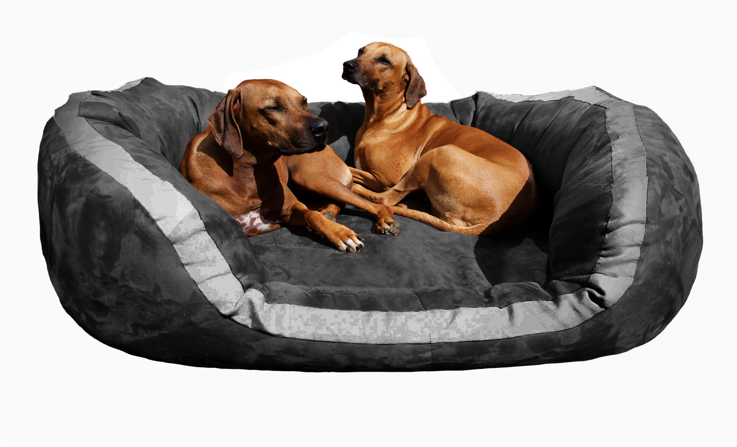 orthop disches hundebett hundesofa pepper velours gr xxl. Black Bedroom Furniture Sets. Home Design Ideas