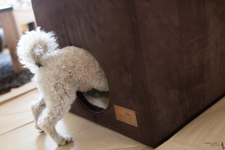 Image result for Poodles Hund auf dem Sofa sitzen